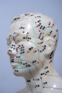 Model head showing acupuncture points